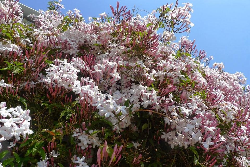 yokohama fleurs