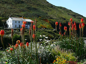 Südengland, Gartenreise, Heideker Reisen, Jenny Curtis-Beard, Wisley Garden, Royal Horticultural Society, Hestercombe Garden, Newquay, Boscastle, Tintagel, Cornwall, D