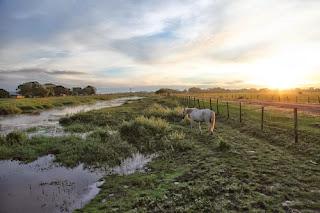Premik v čudoviti Los Llanos