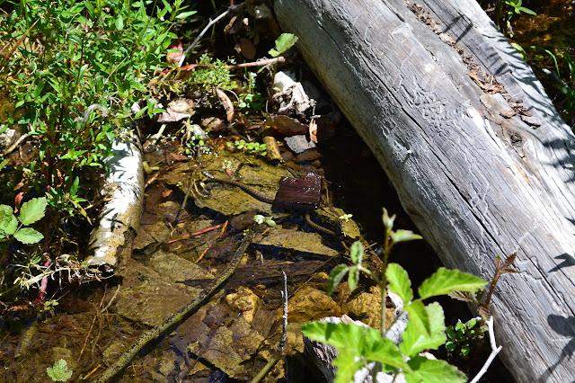 little water snake slipping away