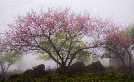 hoa trong sương