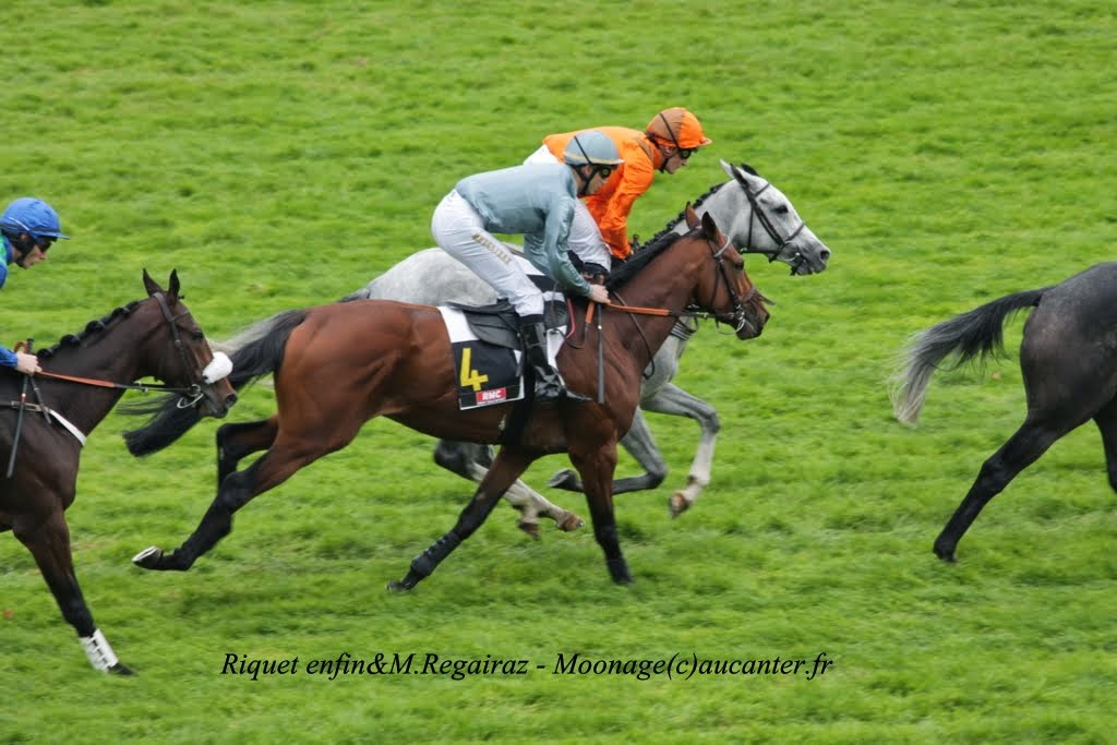 Photos Auteuil 2-11-2014 (48h de l'obstacle) IMG_5366