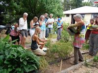 Bunya explaining plant families in the Bellbunya kitchen garden.