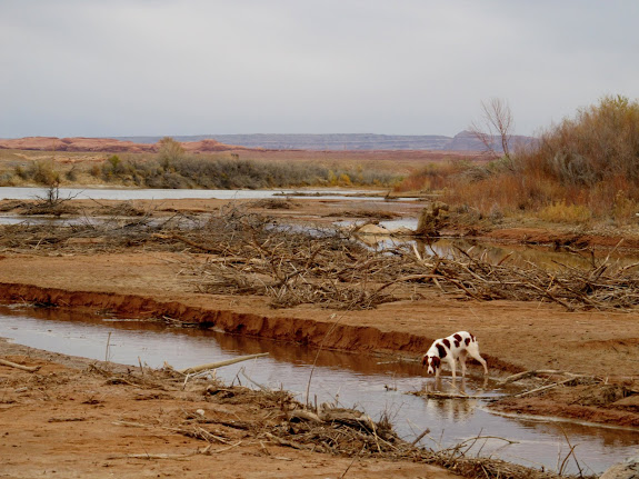 Torrey at the Green/San Rafael confluence