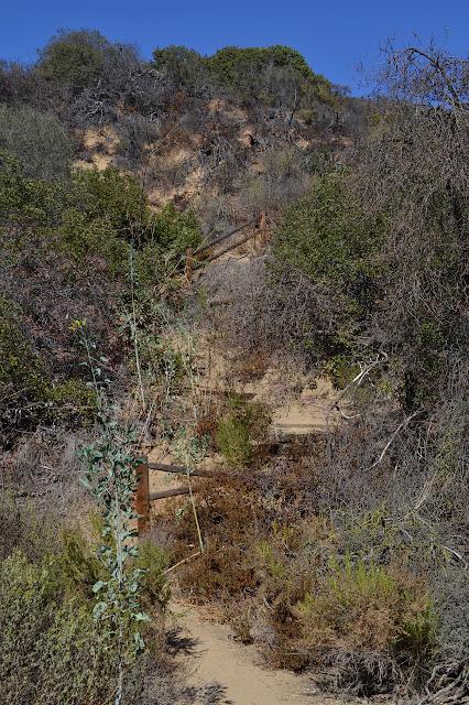 wooden steps in the hillside