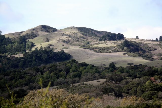 Windy Hill in Northern California