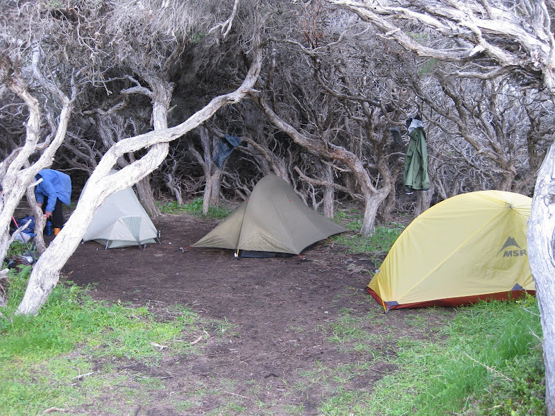 Tents amongst the thicket at Moses Campsite, Cape to Cape Track