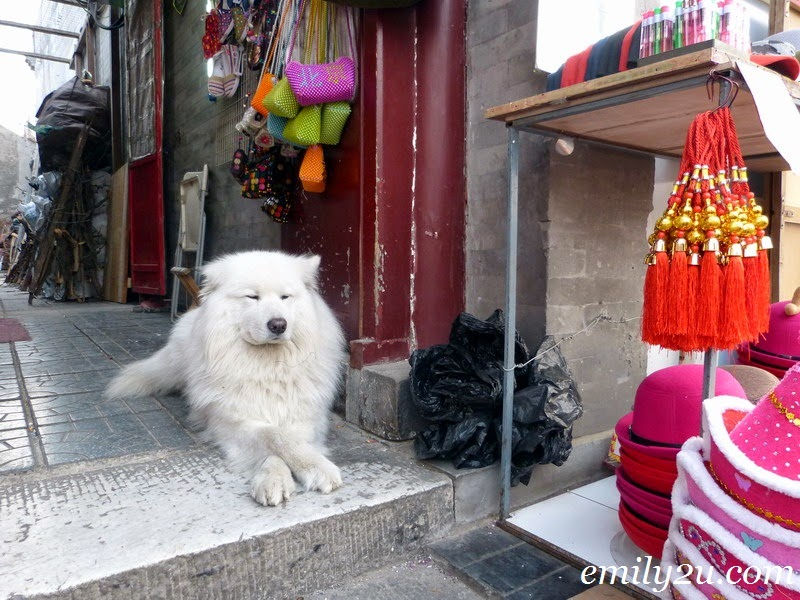 Dogs in Beijing, China
