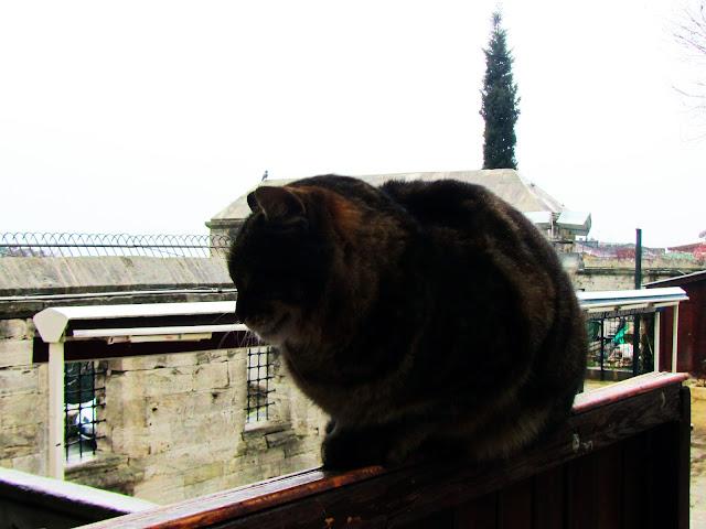 Gato Na Mezquita Azul