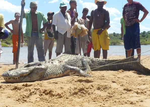 Questões e Fatos sobre Crocodilianos gigantes: Transferência de debate da comunidade Conflitos Selvagens.  - Página 3 1254-4