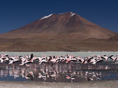 Llacuna Hedionda, plena de flamencs