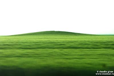 câmpuri verzi