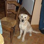 Portée Cléa x Cazan 2011 - Mr Gris / Galak dans sa nouvelle famille