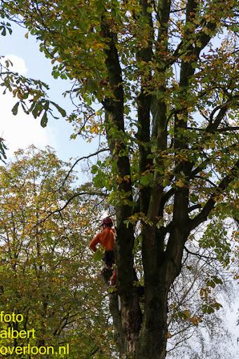 Bomen gekapt Museumlaan in overloon 20-10-2014 (10).jpg