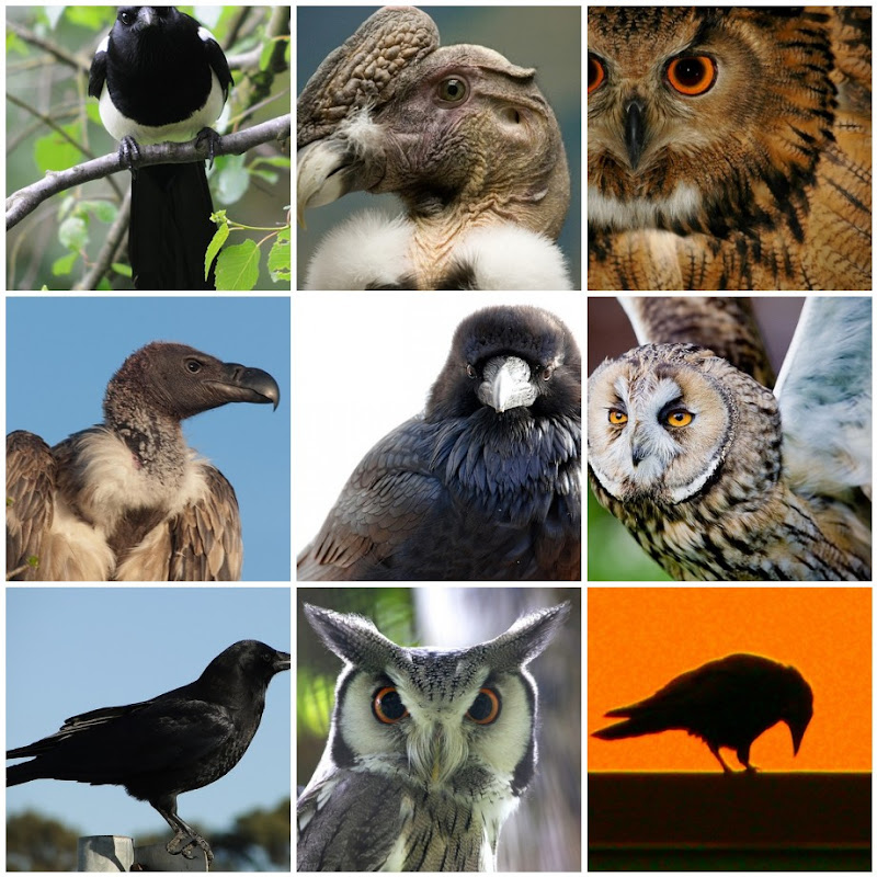 Spooky Bird Photo Collage