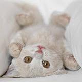 gato, gatito, pet, cat, mascota, mascotita