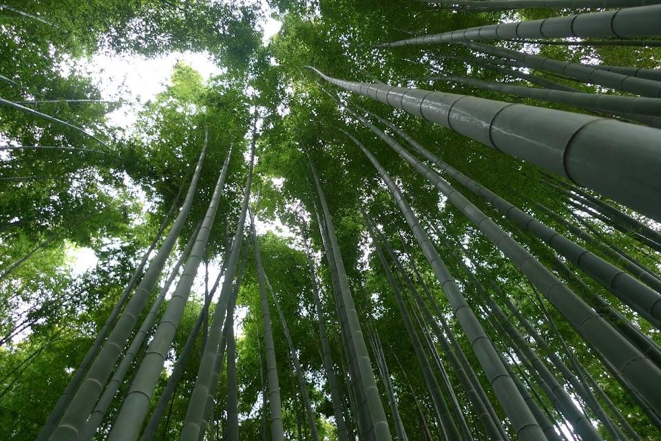 kamakura bambou hokokuji