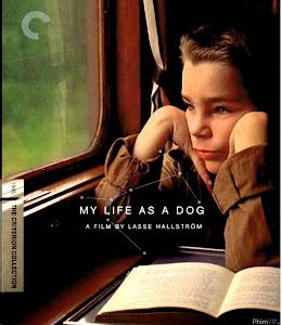 Đời Đen Như Chó - My Life As A Dog poster