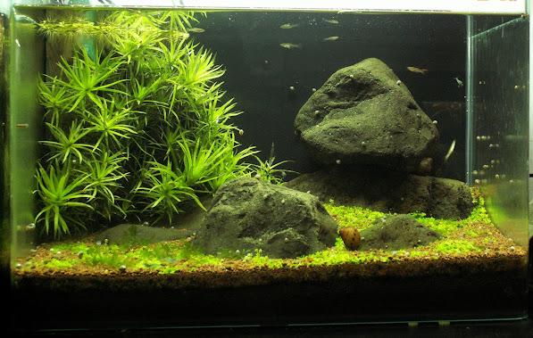 Aquariums plantés Aquarium+35+litres+n++6+19+03+2013+