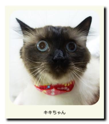 猫のキキちゃん