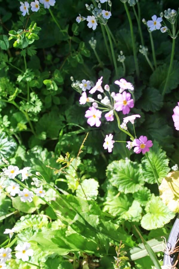 Un petit air de printemps... IMG_3844