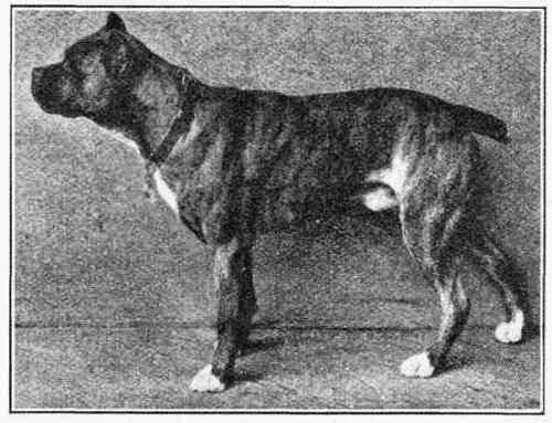 Boxer do século XIX