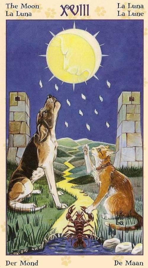 Tarot Notes: REVIEW (by Zanna): Tarot Of Pagan Cats