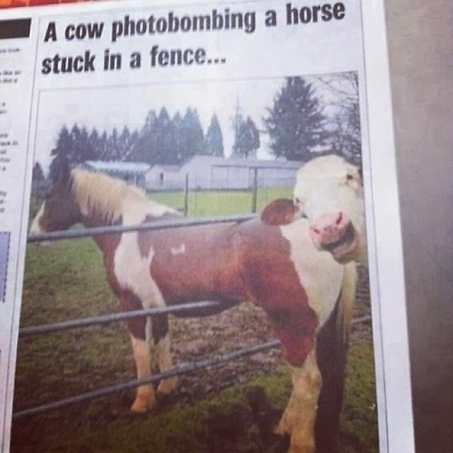 animal-photobombs-10.jpg
