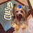 Coco Davis avatar image