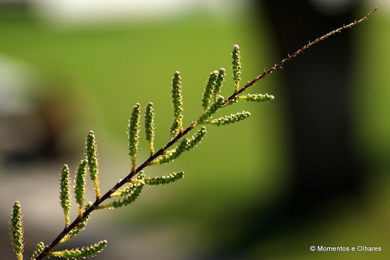 Natureza a renascer