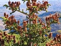 https://sites.google.com/site/malagaprovince/excurciones/hiking/sierra-de-las-nieves