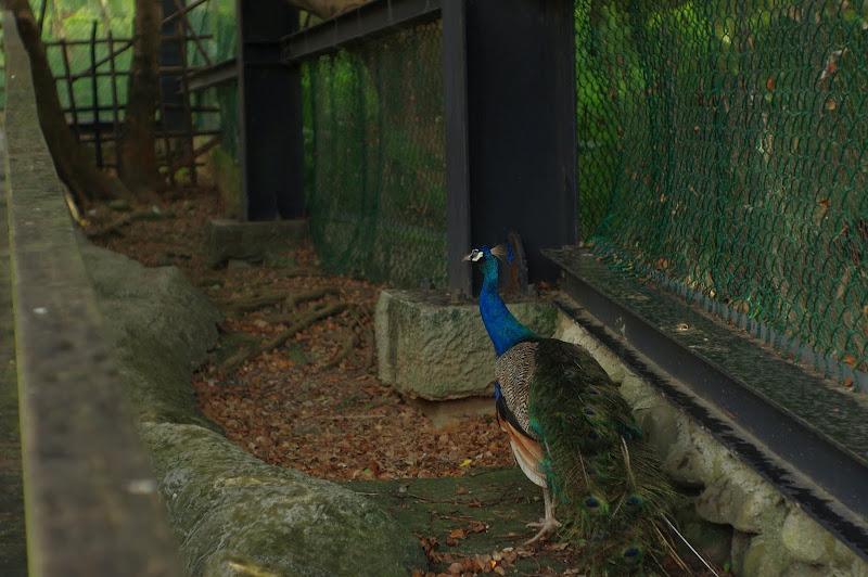 新竹動物園   鳳凰50/1.7