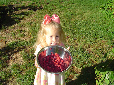 picking raspberries