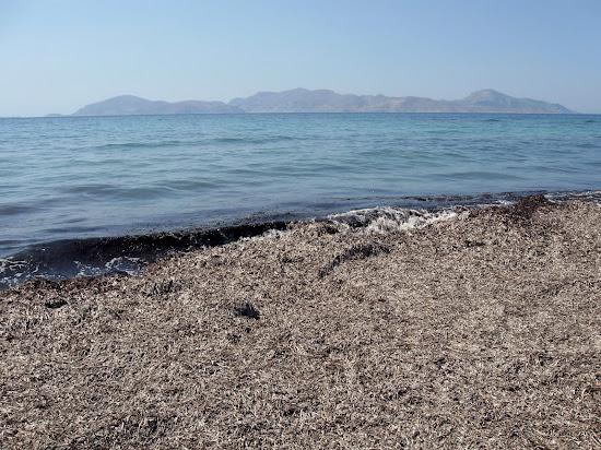 glony na plaży Mastichari Beach na Kos