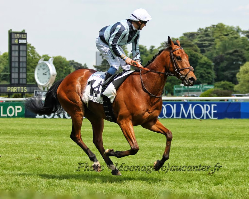 Photos Longchamp 25-05-2014 IMG_1185
