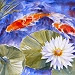 Koi in a Lily Pond VI