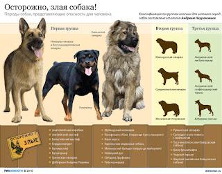 Осторожно-злая собака! - Инфографика о породах злых собак.