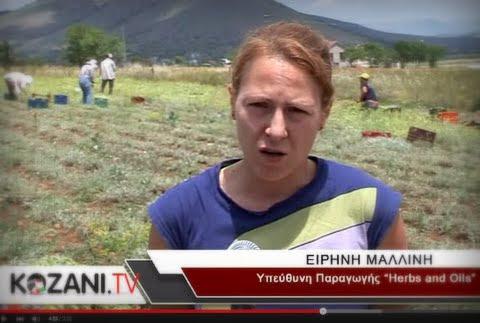 Από την Αθήνα στην Ξηρολίμνη Κοζάνης για να καλλιεργήσουν τσάι του βουνού και αρωματικά φυτά (video)