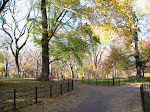 A gorgeous scene in Central Park. You gotta agree!
