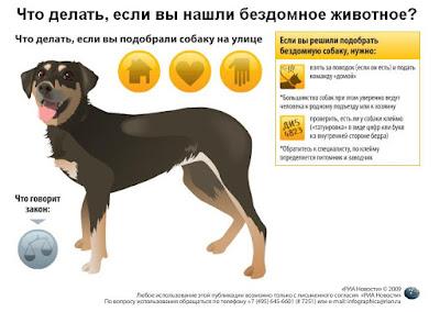 Что делать, если нашли бездомную собаку? - Инфографика