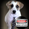 Advocate for Saving Dogs