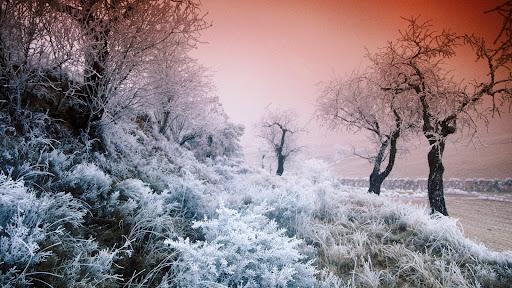 Hoarfrost-Covered Landscape.jpg