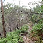 Birwanna Track above Apple Tree Bay (118042)