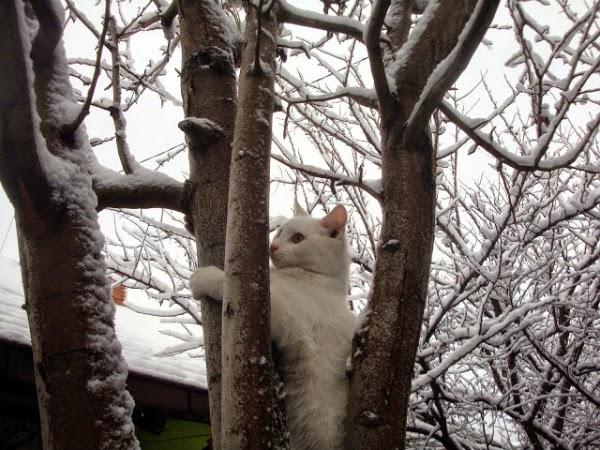 Белый кот на дереве