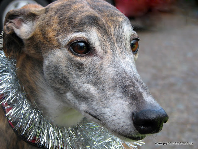Click here to see Jayne's RGT Loe Pool photographs
