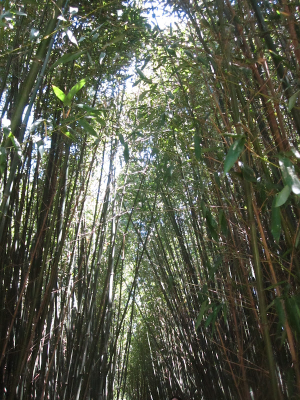 Bamboo forest outside the Chinese Scholar's Garden at Snug Harbor