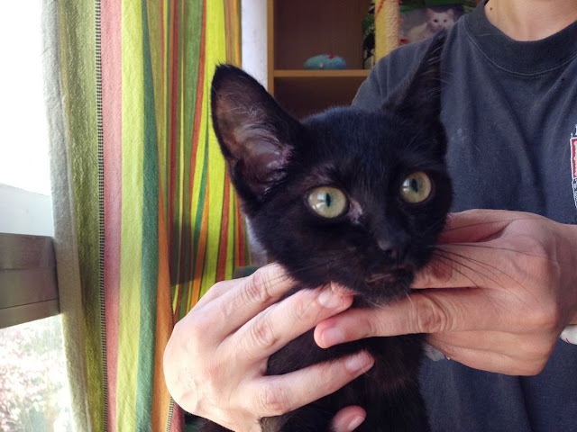 Yoko, la gata rescatada de la alcantarilla IMG_3921