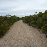 Wide trail in the Awabakal Nature Reserve (391790)