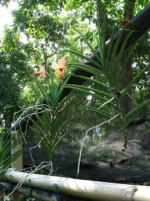 Из зимы в лето. Филиппины 2011 - Страница 7 IMG_0006%252520%2525286%252529