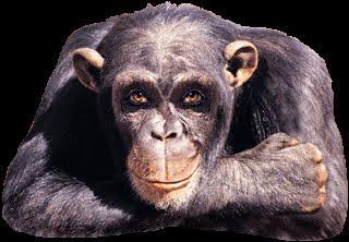 h-ape-a.gif